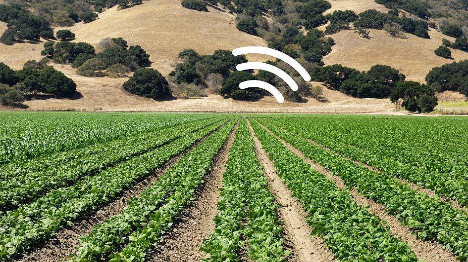 Photo of a spinach crop with a white wifi signal logo overlaid
